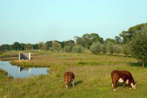 Foto van landschap waterschap Vechtstromen