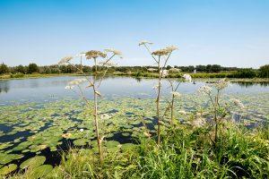 Natuurvriendelijk waterbeheer
