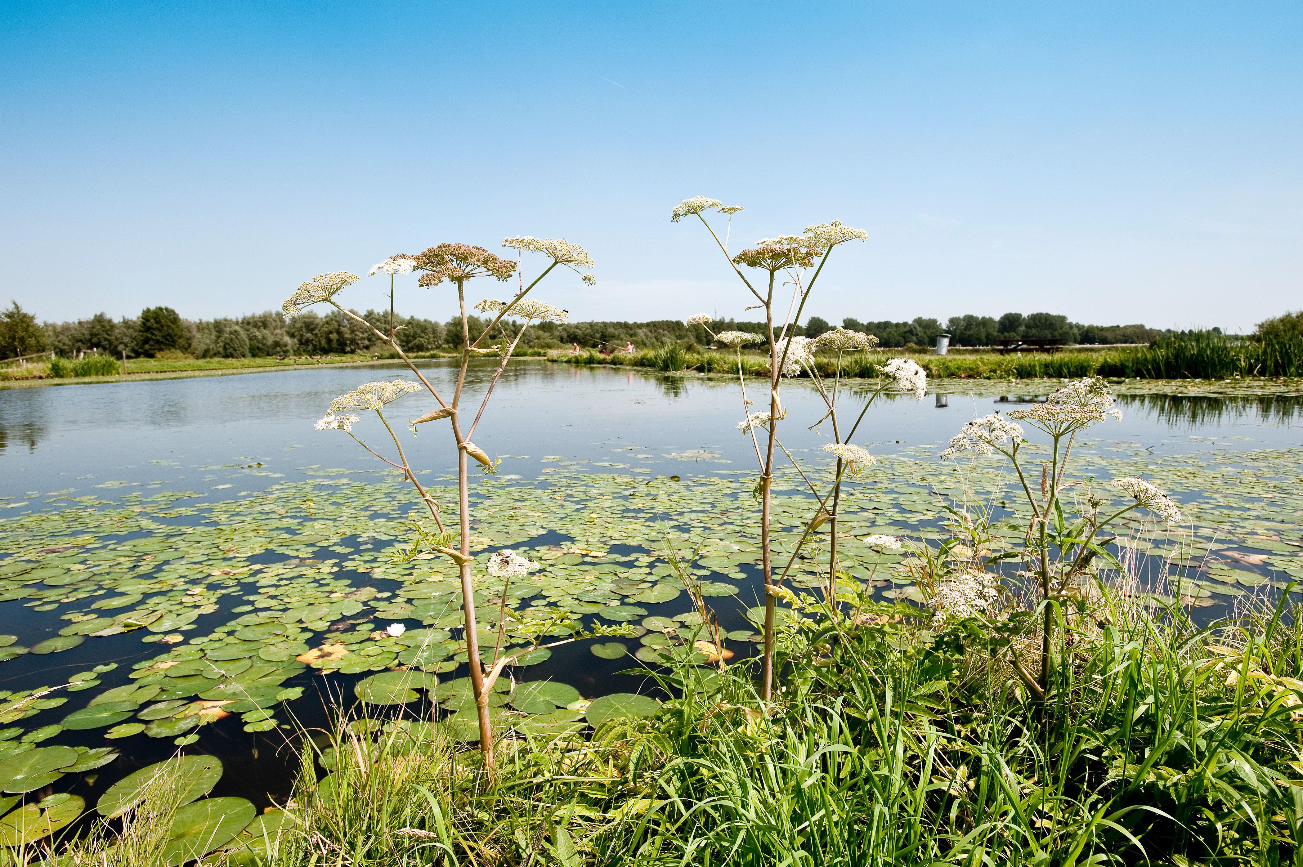 Natuurlijke oever met planten en waterlelies
