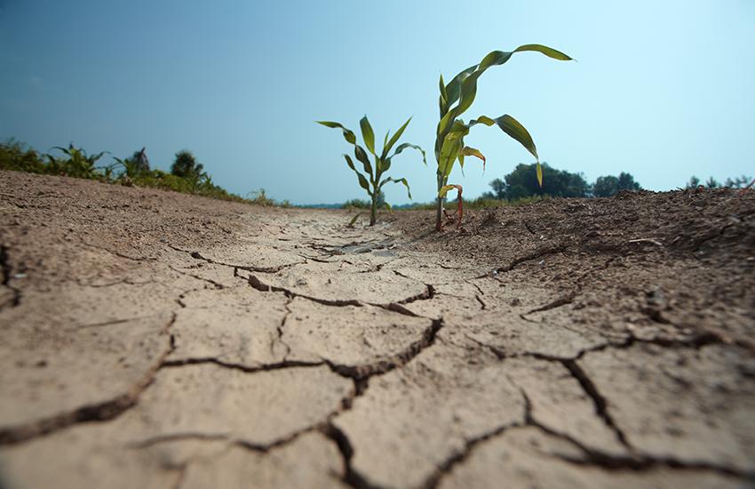 Uitgedroogde akker, gebarsten grond.